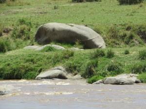 Hippo Rock